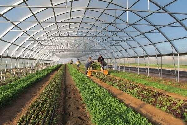 افزایش ۲ برابری کشت گلخانهای در جوین