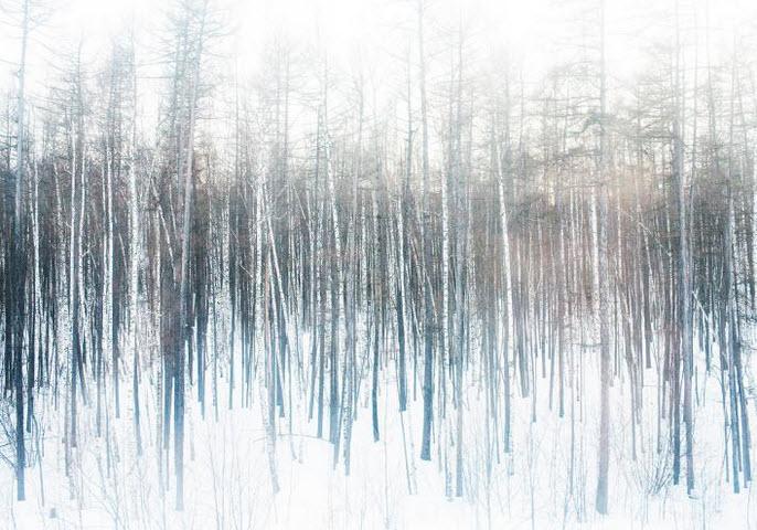 عکس منتخب نشنال جئوگرافیک از جنگل برفی روسیه