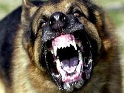 حمله وحشیانه سگهای شکاری به زن باردار در خیابان + عکس