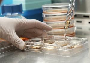 تجارت سلول در دنیای امروزی رونق گرفته است
