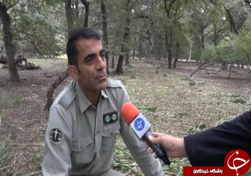 راهی برای نجات گوزنهای زرد ایرانی + فیلم