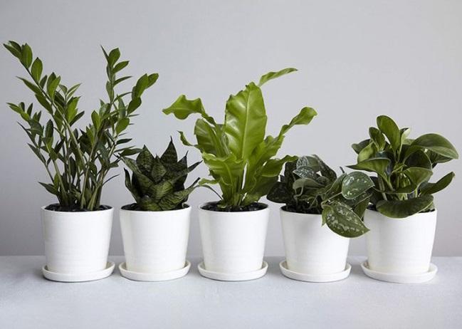 سلامت ششها با گیاهان خانگی///ثباتی