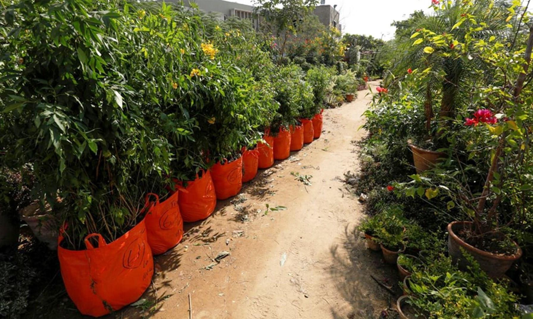 زائری که ۵۰ هزار درخت در مسیر نجف تا کربلا میکارد + تصاویر