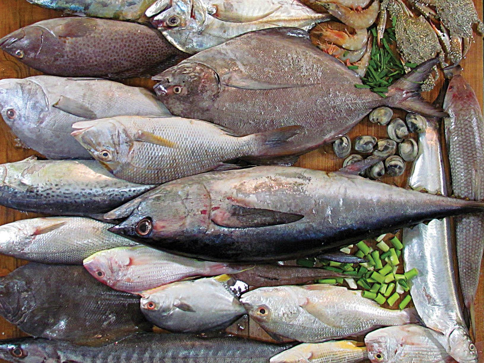 انواع ماهی در غرفه های تره بار با چه قیمتی بخریم؟