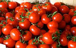 صادرات محدود گوجه فرنگی تاثیری بر بازار ندارد/ تعادل قیمت گوجه فرنگی در هفتههای آتی