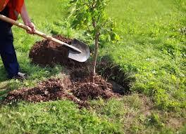 کاشت درخت فضیلت است