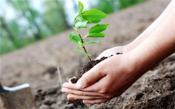 کاشت ۵۳ هزار اصله نهال جنگلی در فارس