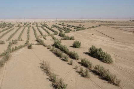 پروژه بین المللی ترسیب کربن، گامی مؤثر در توسعه پایدار روستایی