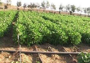 اقدامات پیشگیرانه در جلوگیری از مخاطرات کشاورزی در دستور کار باشد