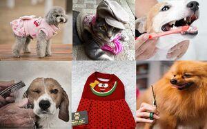 بریزو بپاش مدافعین دروغین حقوق فقرا برای حیوانات خانگیشان/ از اصلاح ۲۶۰ هزار تومانی تا خانه ۱۲ میلیونی!