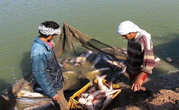 باشگاه خبرنگاران -برداشت ماهیان گرمابی از پسابهای شور  در خرمشهر