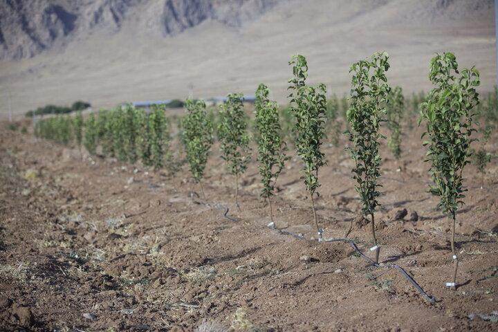 گام بزرگ استان مرکزی در راستای توسعه فضای سبز و جنگل کاری