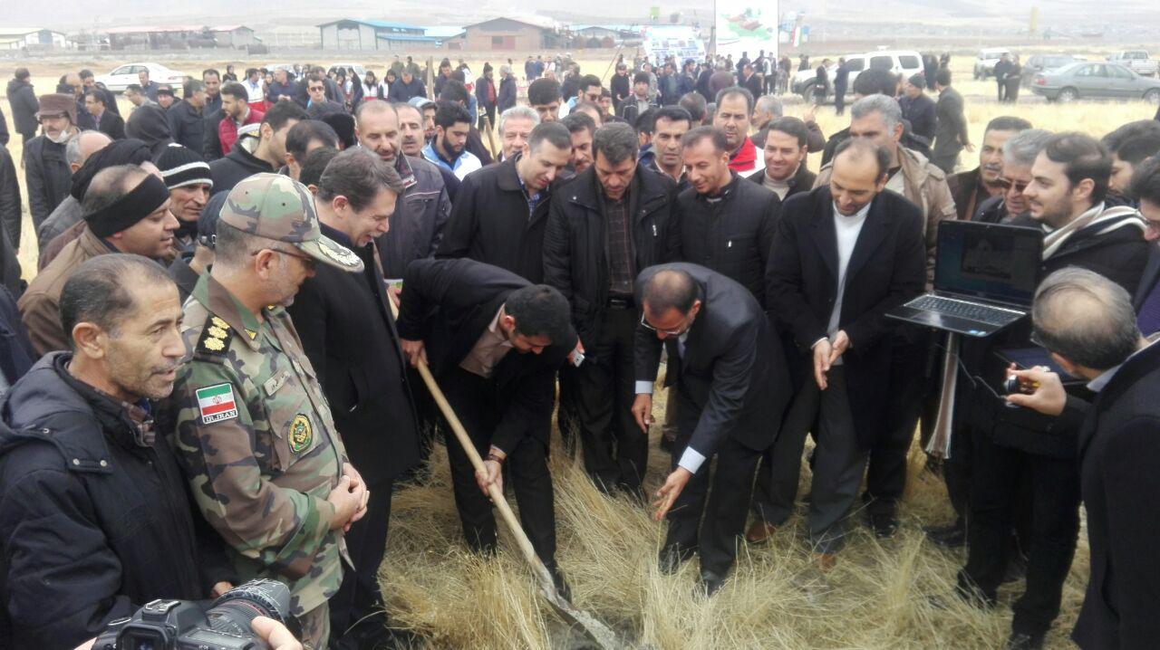 ۲۴۱ هزار اصله نهال در آذربایجان غربی کاشته میشود