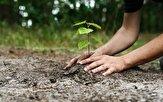 باشگاه خبرنگاران -ترویج فرهنگ حسنه کاشت درخت با کمک دانش آموزان