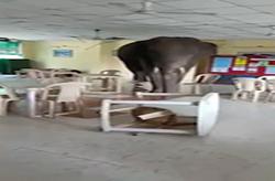 ورود فیل غول پیکر به رستوران ارتش + فیلم