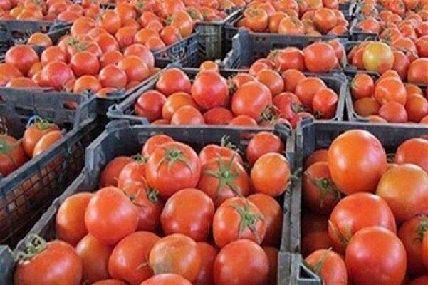 روز/قیمت گوجه فرنگی در بازار شکسته شد/حداکثر نرخ هر کیلو گوجه فرنگی گلخانه ۱۰ هزار تومان