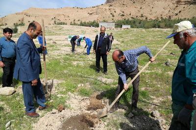 کاشت 2 هکتارنهالکاری در شهرستان درگزین