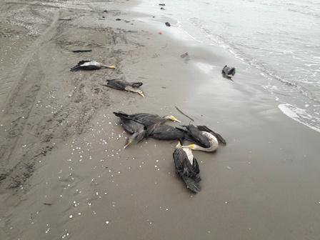 کشته شدن ۵۲ باکلان در سواحل خزر