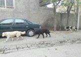 باشگاه خبرنگاران -پرسه سگهای ولگرد در کوچه و خیابانهای «کهک» + تصاویر