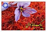 باشگاه خبرنگاران -صادرات زعفران، به کام توریستهای قاچاقچی + صوت