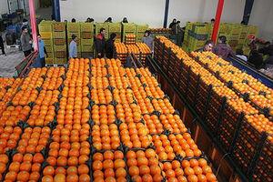 ضرورت هماهنگی تمامی دستگاههای مرتبط برای تامین میوه شب عید