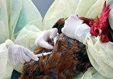 باشگاه خبرنگاران - پایش و آموزش به جوامع محلی درباره آنفلوآنزای پرندگان