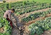 باشگاه خبرنگاران -مشکلاتی که از کاشت تا برداشت گریبان کشاورزان را فشار میدهد + فیلم