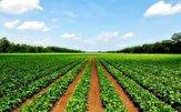 باشگاه خبرنگاران -ایده جالب کشاورز برای محافظت از محصولاتش