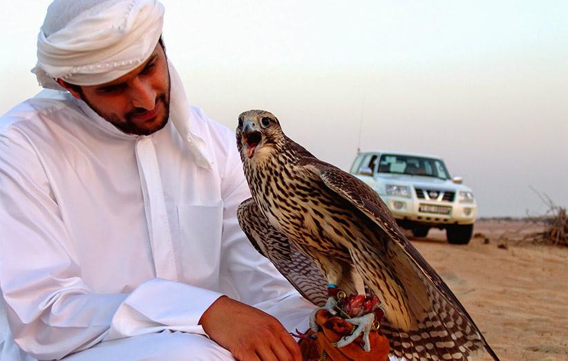 سلاطین آسمان در بند/ شیوخ عرب در انتظار رسیدن پرندههای زنده قاچاق از ایران