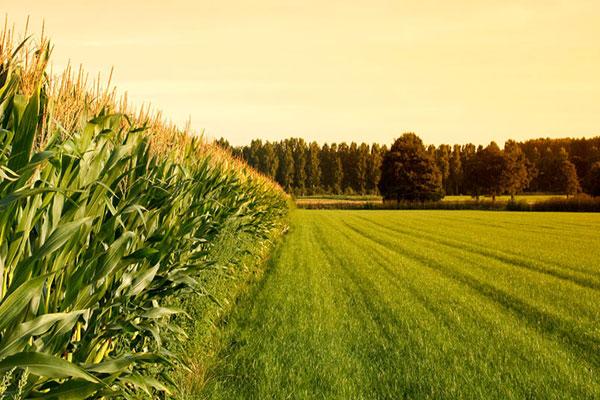 با تامین زیرساخت میتوانیم ۸ تا ۱۰ درصد محصولات استراتژیک کشاورزی کشور را تامین کنیم