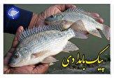 باشگاه خبرنگاران -سرنوشت ماهی تیلاپیا در انتظار حکم دستگاه قضا + صوت