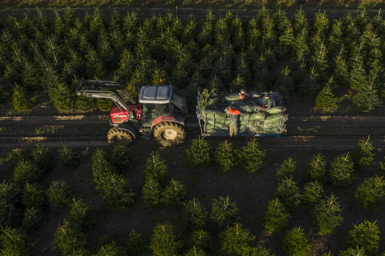 تصاویر روز: قطع درختان کاج برای کریسمس در انگلیس تا تجمع در داخل واگنهای متروی پاریس در پی اعتصابات عمومی