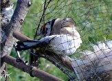 باشگاه خبرنگاران -جمع آوری تلههای شکار پرندگان در پارک ملی بوجاق