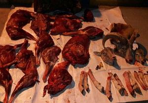 شکارچیان غیر مجاز در سرخه دستگیر شدند