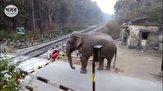 باشگاه خبرنگاران -ذکاوت عجیب فیل حین عبور از گیت خط راه آهن