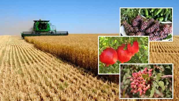 افزایش ۲ تا ۴ برابری  تولید محصولات کشاورزی با اجرای طرحهای آبیاری نوین