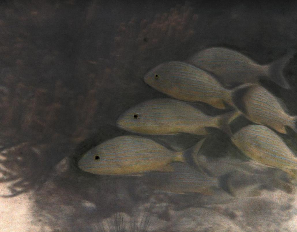 تصویری قدیمی از ماهیهای صخرهای در عکس روز نشنال جئوگرافیک