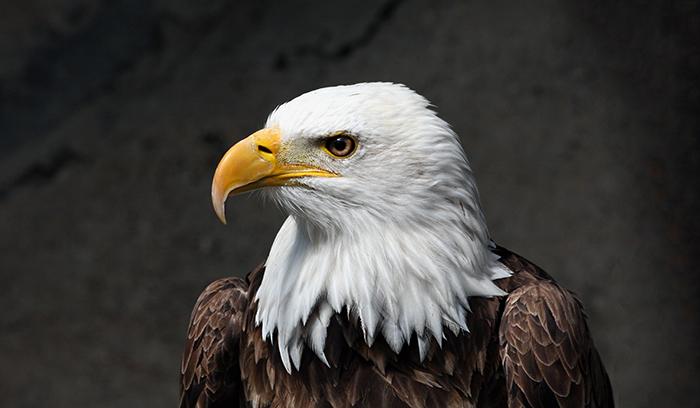 نجات عقاب گرفتار از چنگ اختاپوس در اقیانوس آرام + فیلم