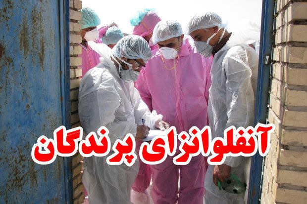موردی از آنفولانزای فوق حاد پرندگان در همدان مشاهده نشده است