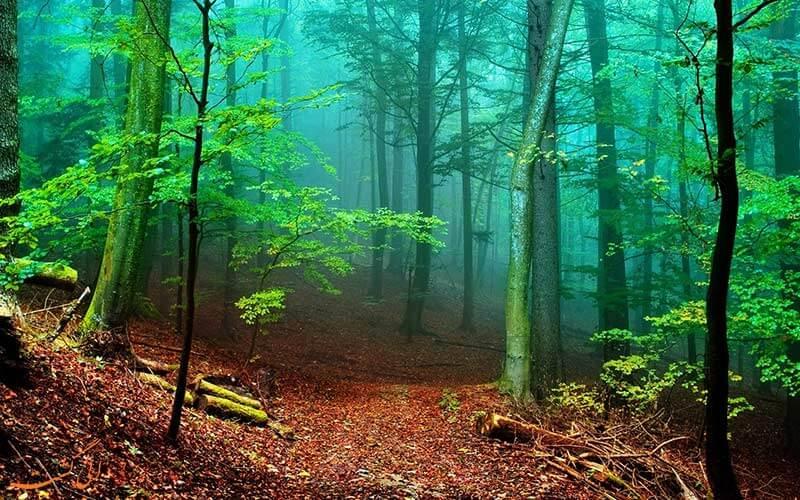 جلویری از خشک شدن جنگل ها