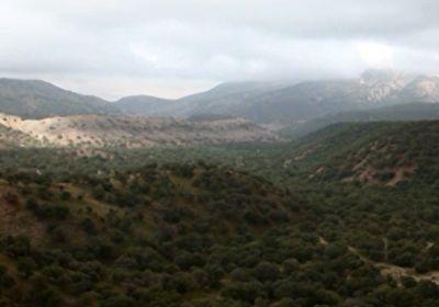 جنگل کاری اقتصادی برای بهبود اوضاع محیط زیست + فیلم