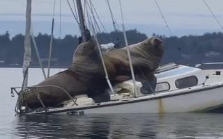 خوش گذارانی مسافران ناخوانده و عظیم الجثه در قایق