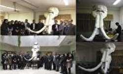 بازسازی جمجمه فسیل ۲ میلیون ساله در زنجان
