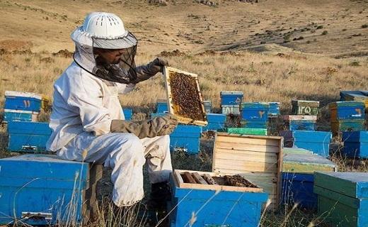 زنبور عسل، موجودی کوچک که نقشی بزرگ در محیط زیست دارد