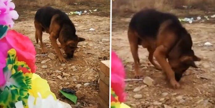 صحنه باورنکردنی که سگ باوفا بر سر قبر صاحبش خلق کرد!