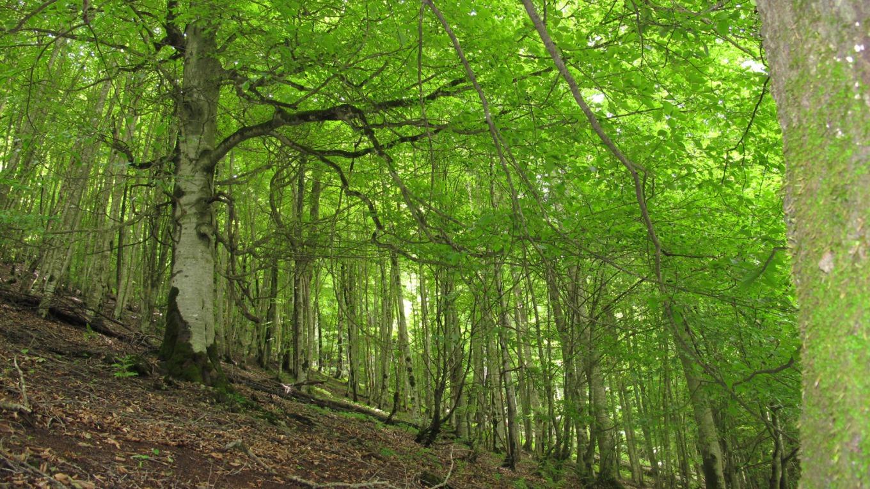 میزان نابودی جنگل ها هر ساله سبب تنگ شدن نفس کره زمین می شود