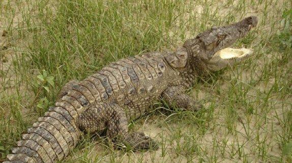 گاندو، زیستگاه بیش از ۴۴۰ گونه جانوری و گیاهی
