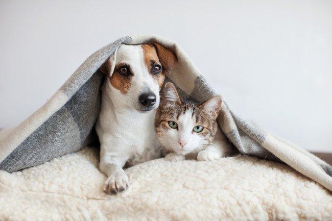 چه بیماریهایی از حیوانات به انسان منتقل میشود؟