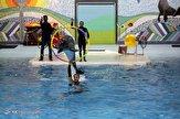 باشگاه خبرنگاران - تنها دلفین دلفیناریوم برج میلاد به دریای سیاه منتقل میشود