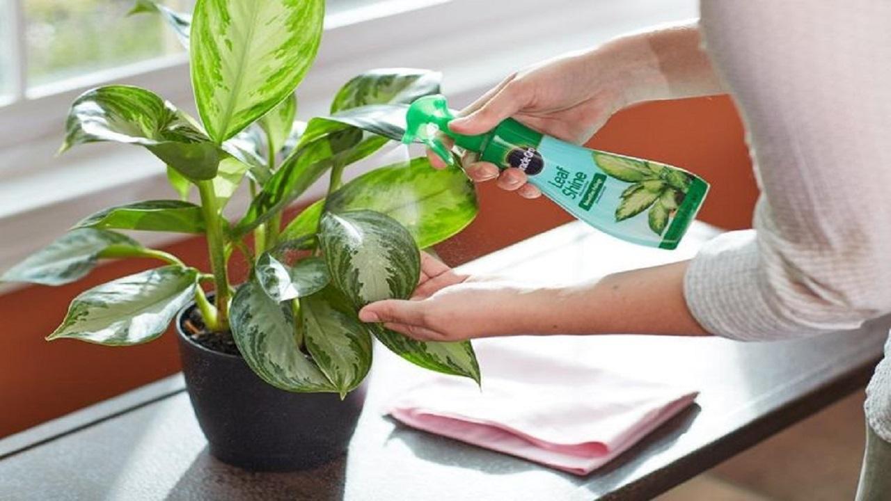 حسنی// آیا گیاهان ناقل ویروس کرونا هستند؟